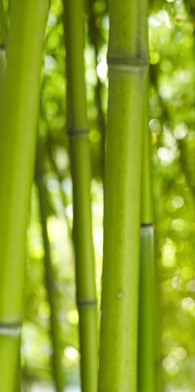 fototapete bambus tapete kunstdruck wandbild ebay. Black Bedroom Furniture Sets. Home Design Ideas