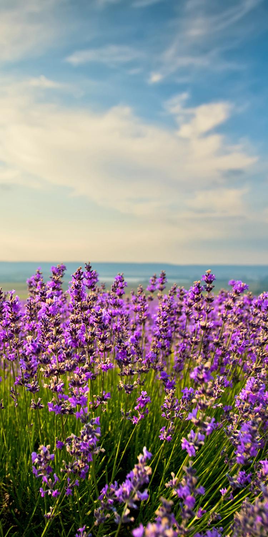 fototapete lavendel tapete kunstdruck wandbild ebay