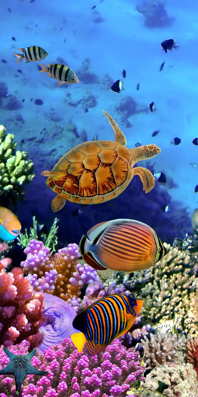 Fototapete korallenriff mit fischen tapete kunstdruck for Teichreinigung mit fischen
